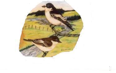 Fågelfors Samhällsförening